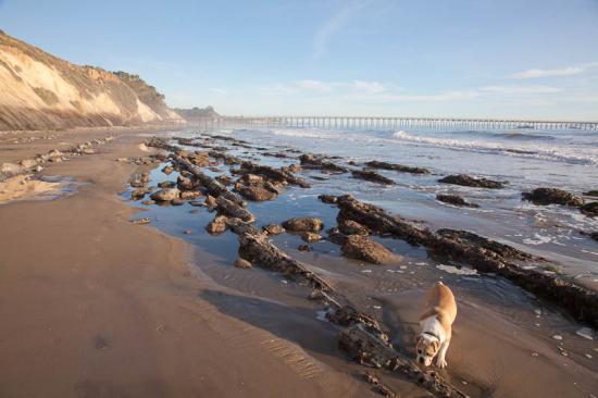 haskells-beach2-10