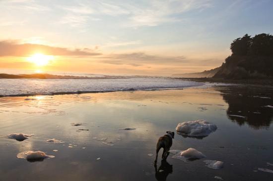 haskells-beach2-22